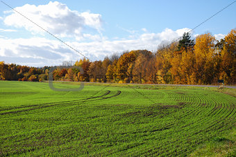 Green field and golden trees
