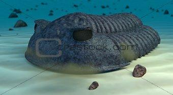 Cambric trilobite render