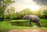 Elefant, bathing  in lake