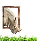 Rhinoceros in bamboo frame with 3d effect