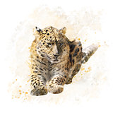 Leopard Portrait Watercolor