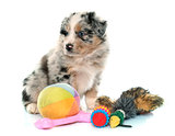 puppy australian shepherd and toys