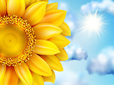 Beautiful sunflower against blue sky. EPS 10