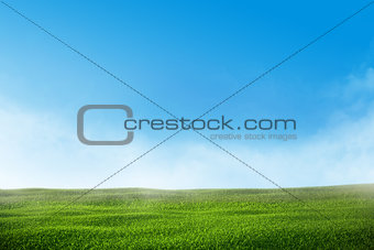Green grass lawn with blue sky and mist