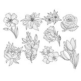 Flower Set. Hand Drawn Vector Illustration