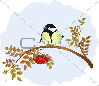 Tit sitting on a branch of mountain ash with berries. EPS10 vector illustration