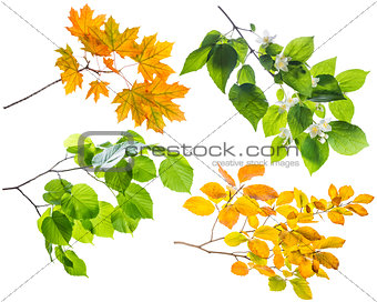 Branch with leaves isolated