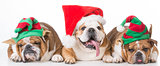 christmas bulldog family