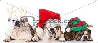 christmas bulldog family