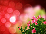 Roses bouquet on of-focus background
