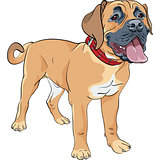 vector sketch dog Boerboel breed