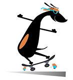 Dog rides a skate