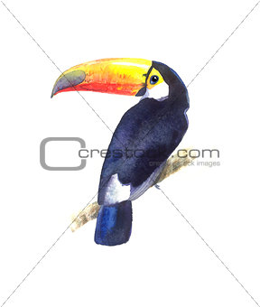 Bright watercolor Toucan bird