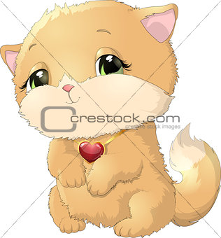 Beautiful kitten on a white background