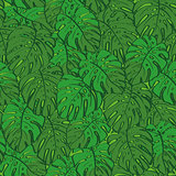 Seamless background, monstera green leaves