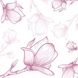 Magnolia Flower Background