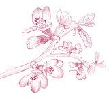 Vintage Cherry Blossom Flower