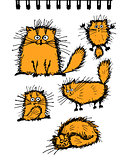 Fluffy orange cats collection, sketch for your design