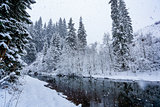 Winter river landscape with snow-covered fir trees