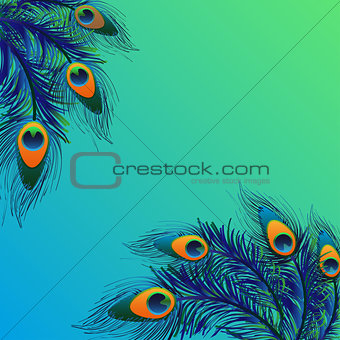 Background design with peacock feathers