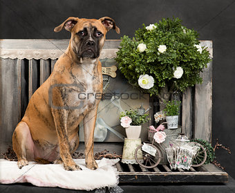 Crossbreed dog in front of a rustic background