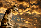 Sunset, ancient lion statue and storm sky