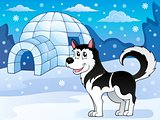 Husky dog theme image 3