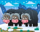 Three muskoxen theme image 2