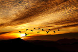 Orange sunset with flying crane birds