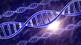 The human genes DNA