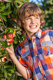 Male Boy Child Picking Apple from Tree in Summer Sunshine