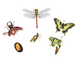 Amazing insect world - metamorphosis