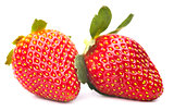 the ripe strawberry