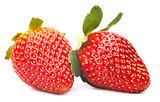 the ripe strawberry
