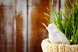 Easter background with cute white bird