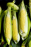Three steamed corn