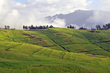 Simien mountain park