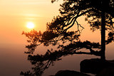 Silhouetted pine tree with sunset