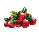 Red Cranberries With Leaves