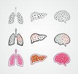 Stylized human organs
