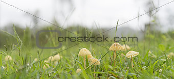 Australian Panorama Landscape View of Small Mushrooms in Green g