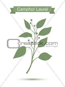 Camphor laurel branch. Green silhouette
