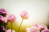 Spring Sunny Mood