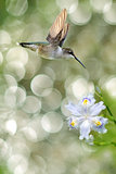 Tiny Hummingbird in the Garden Vertical Image