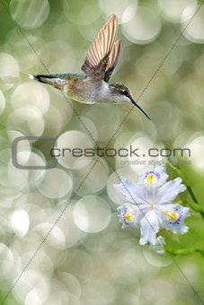 Tiny Hummingbird in the Garden Vertical Image