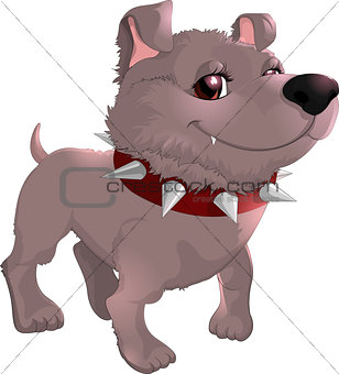 beautiful gray dog on a white background
