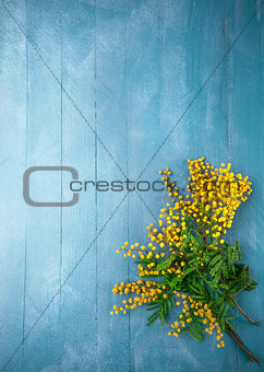 Branch blooming mimosa on blue wooden board