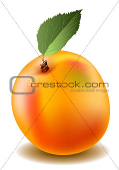 Apricot in mash