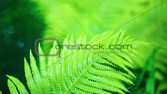 Bright green fern