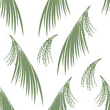 Seamless pattern berries and leaves of Acai palm . Floral background. Vector illustration.  Green silhouette